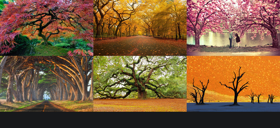 Don't forget to check out the first part of: World's Most Beautiful Trees Photography!