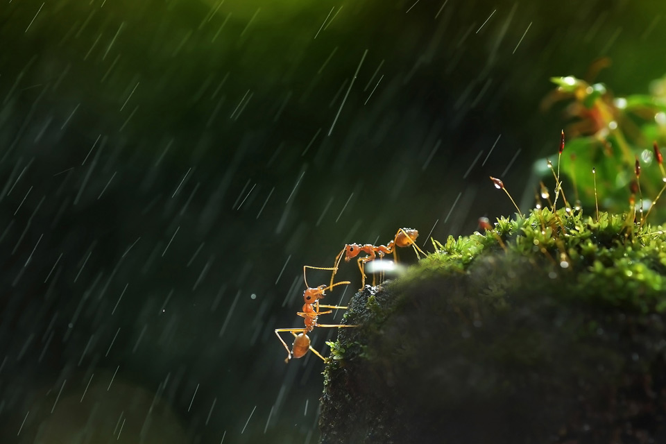 two ants help one another