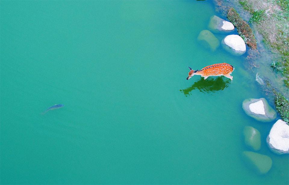 a deer in the water