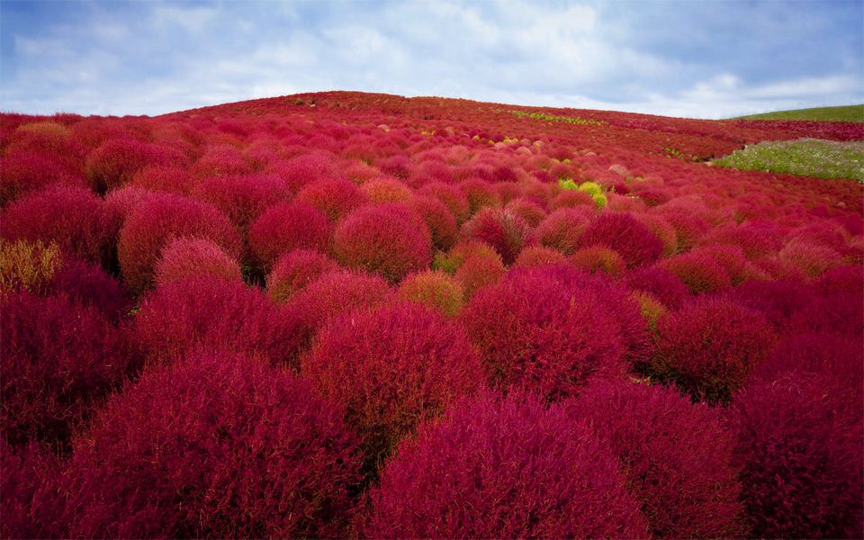 12 Most Beautiful Photos of Japan