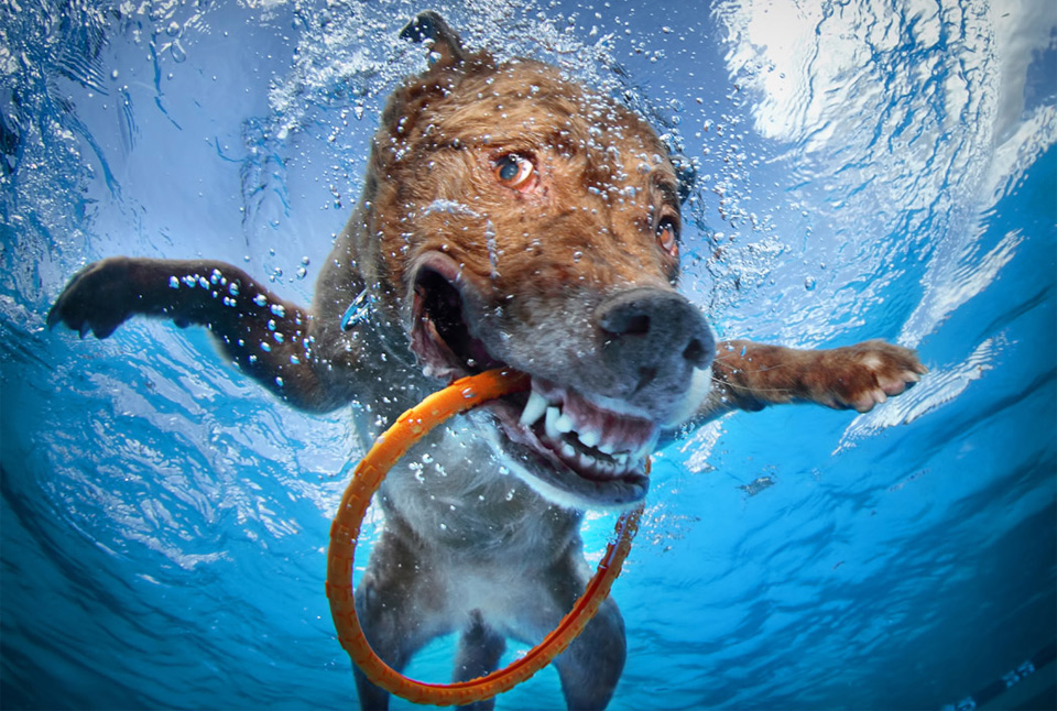 happy underwater dog