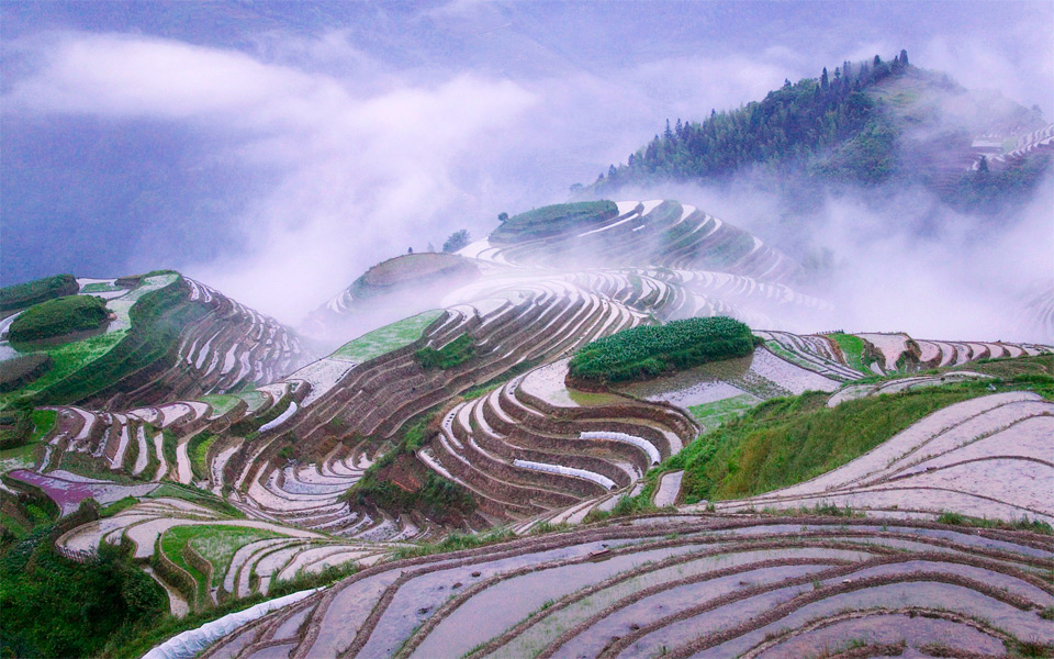 rice terraces in early morning mist, china