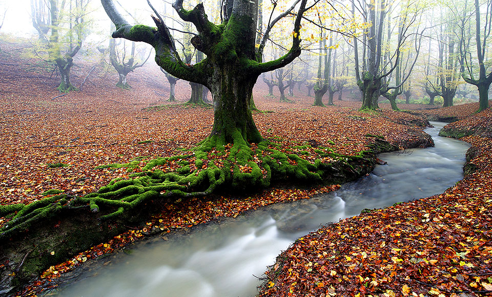 beautiful autumn forest wallpaper