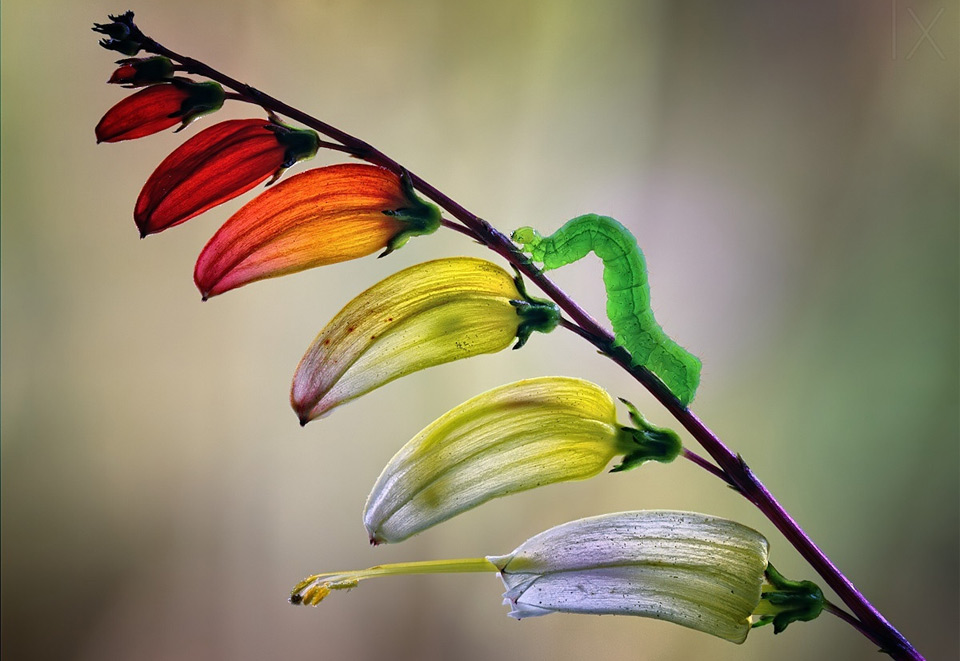 Colorful Nature Photography