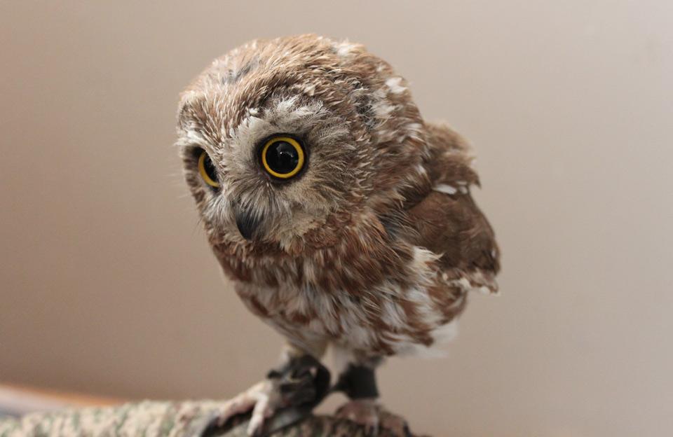 cute-baby-owl.jpg