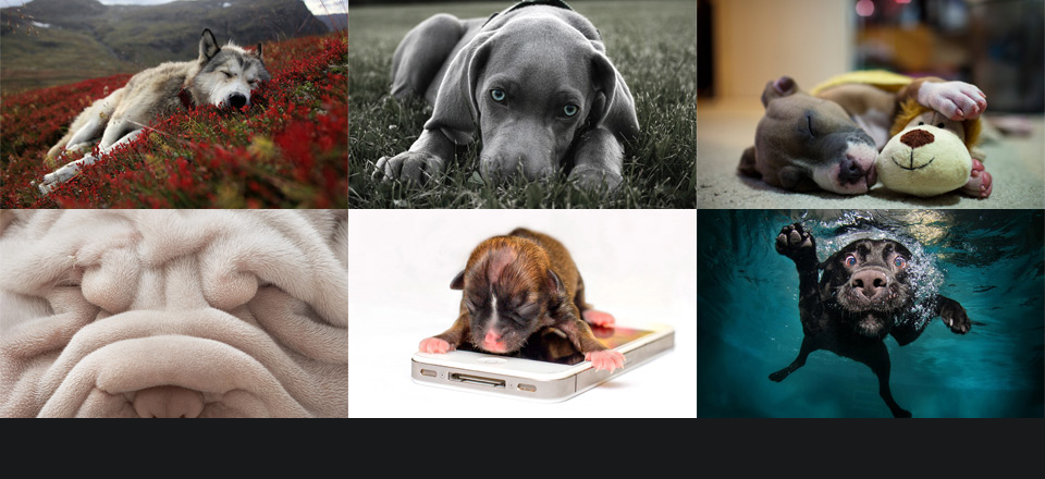 Don't forget to check the first part of The Amazing World Of Dogs In Photography!