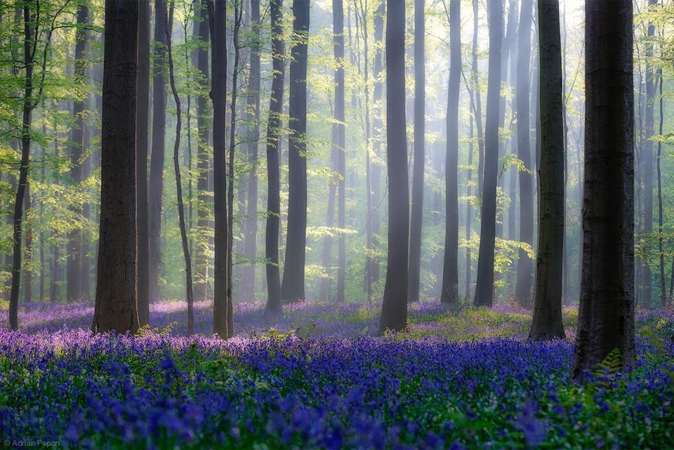 10 best fairy tale forests..
