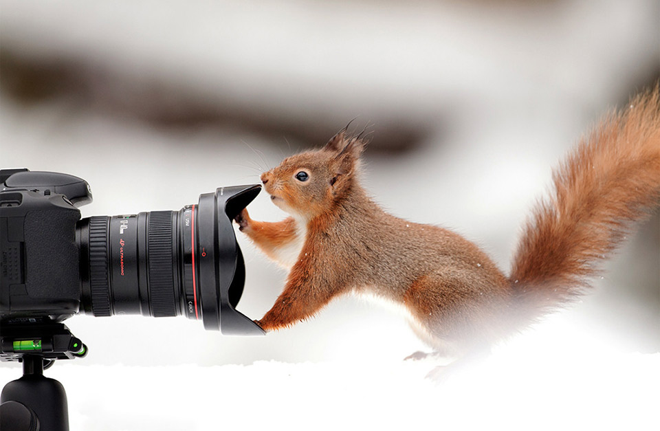 squirrel-and-a-camera