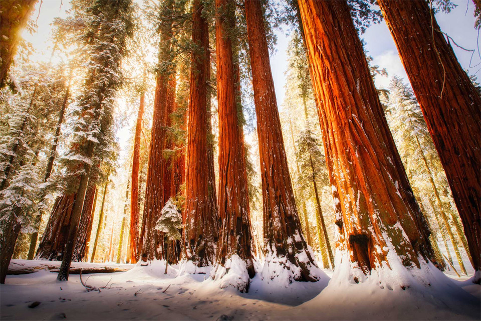 sequoia national park in winter photo | One Big Photo