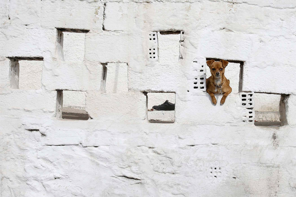 a dog in a wall