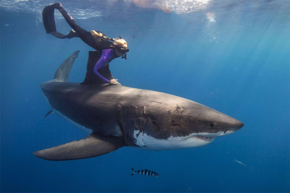 the woman who swims with sharks