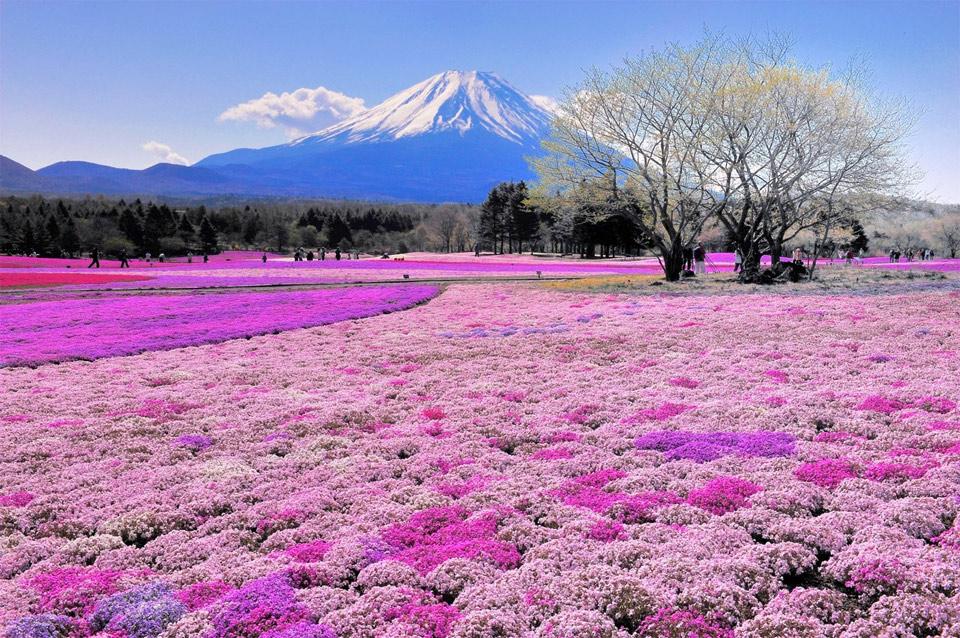 breathtaking view on mount fuji, japan