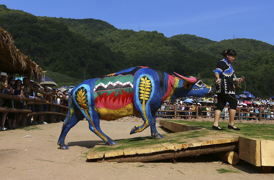 buffalo bodypainting competition in china