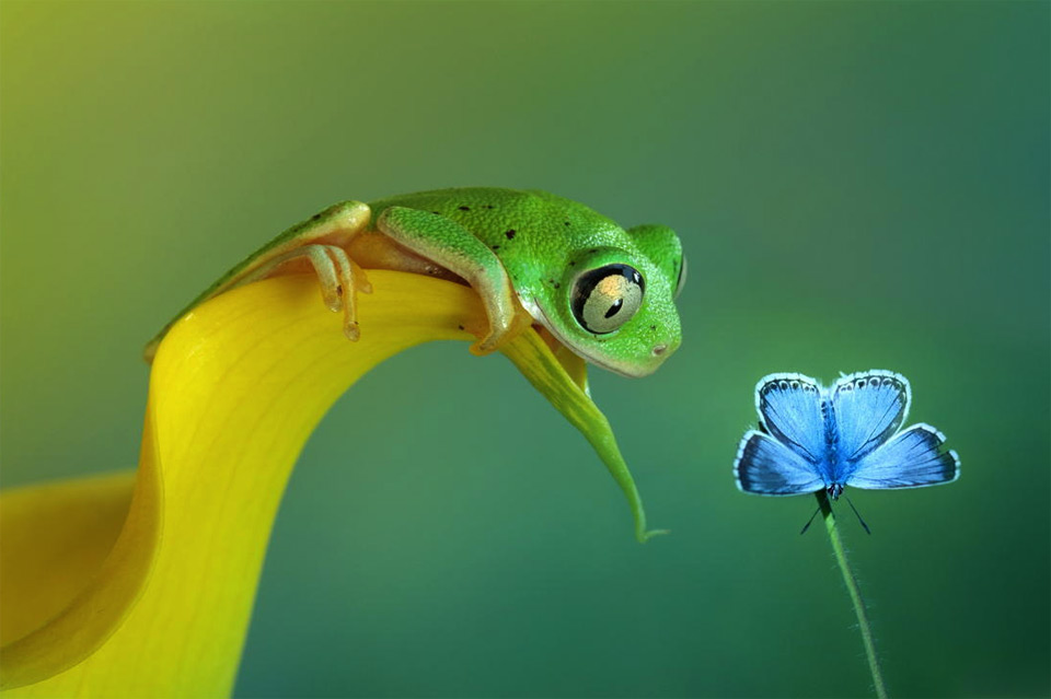 frog and butterfly friendship