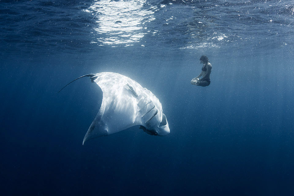 meditating with manta ray