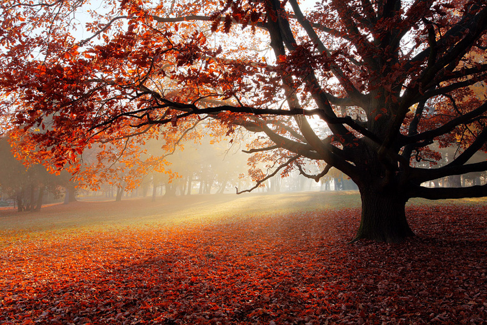 park in autumn, slovakia