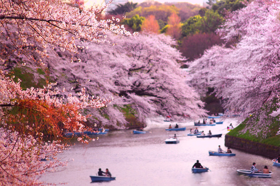 Spring's Almost Here: The Most Beautiful Cherry Blossoms Around The World