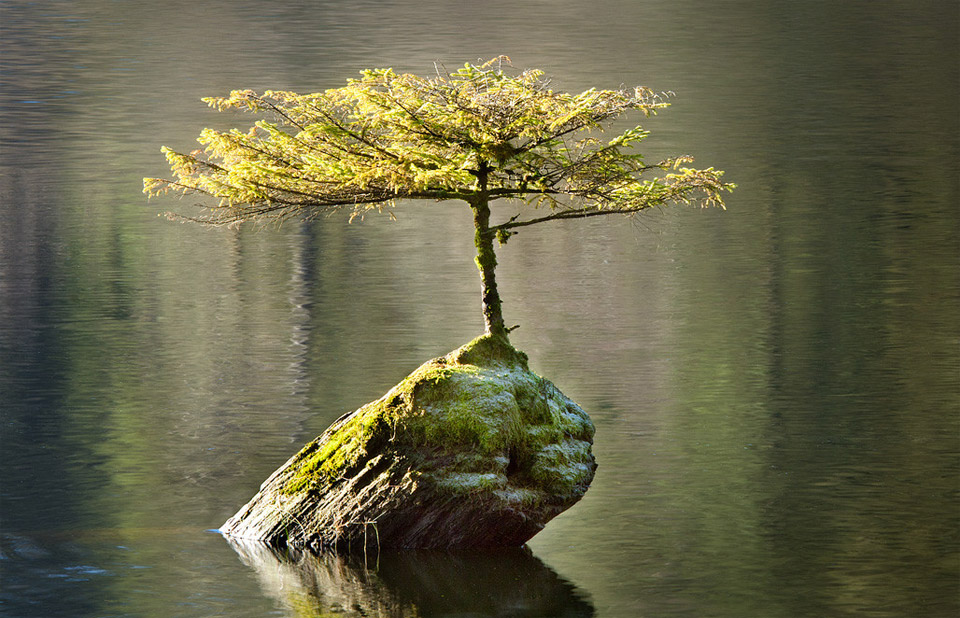 tree growing on a log