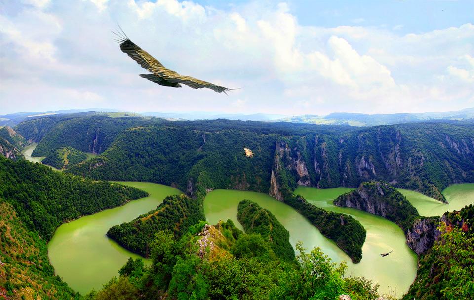 eagle over river uvac, serbia