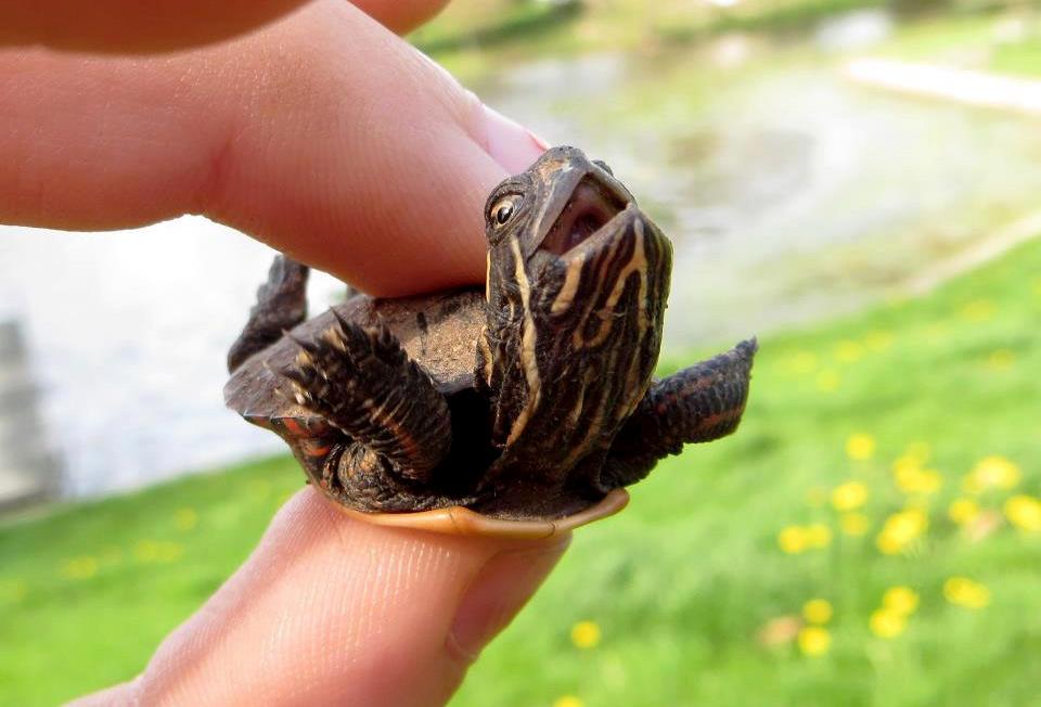happy little turtle