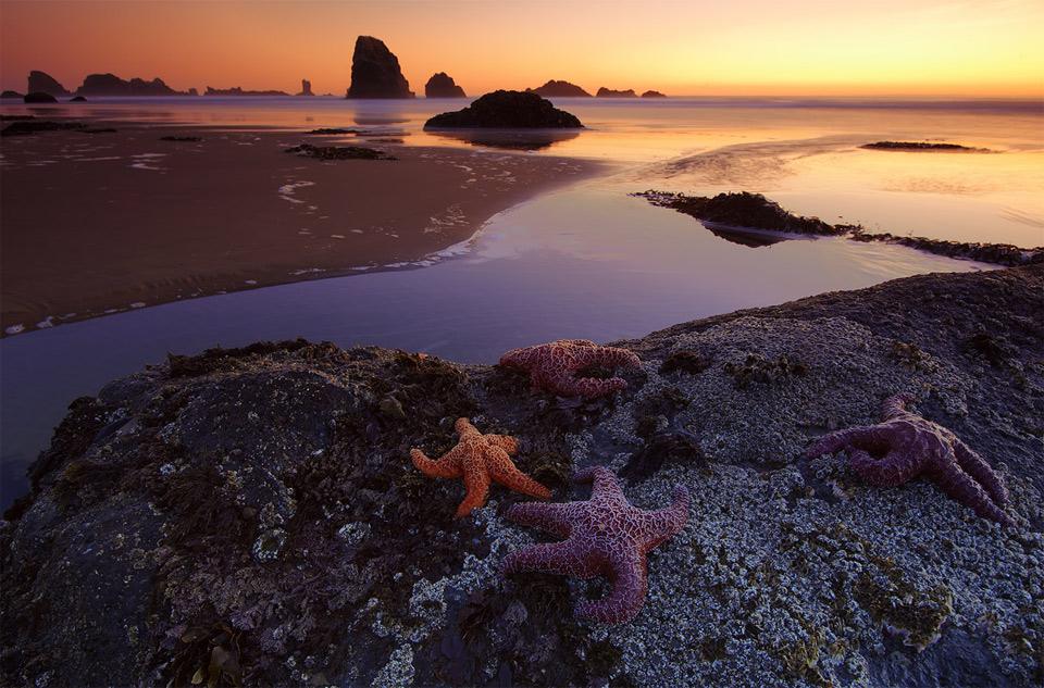 stars of indian beach, oregon