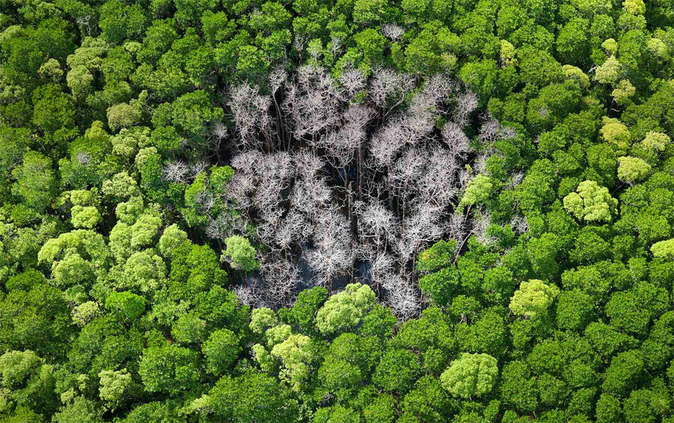 forest trees burnt by lightning