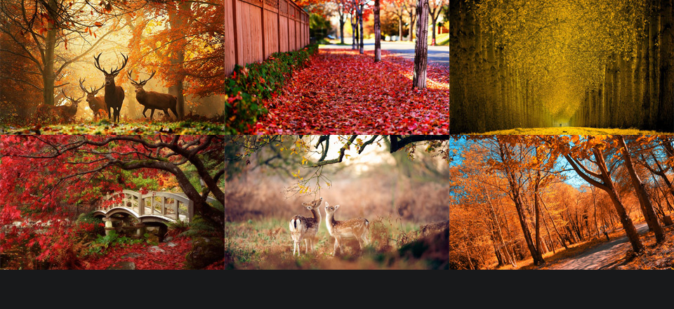 Don't forget to check the first part of Beautiful Colors of Autumn in Photography!