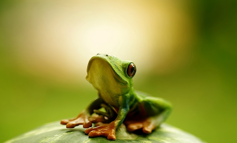 hello, i am cute frog