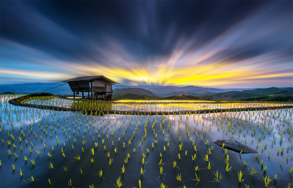 rice fields, thailand