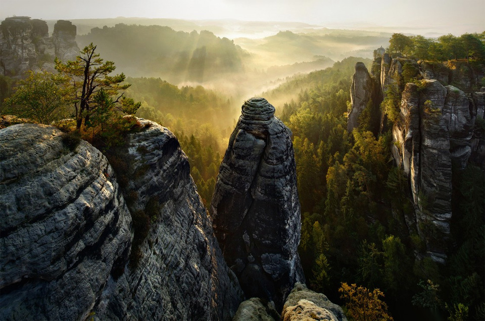 rock forest, germany