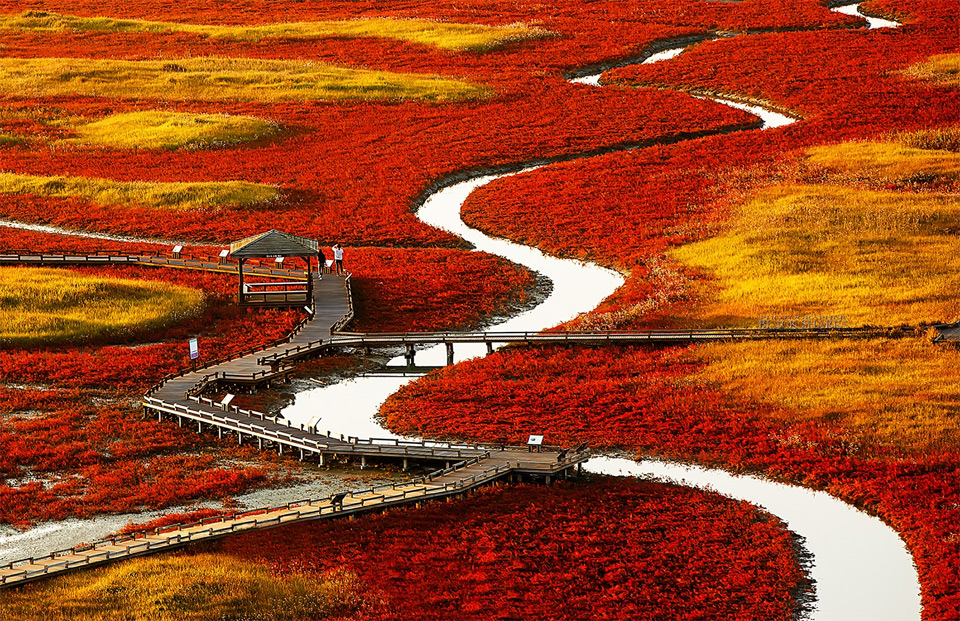red fields of south korea