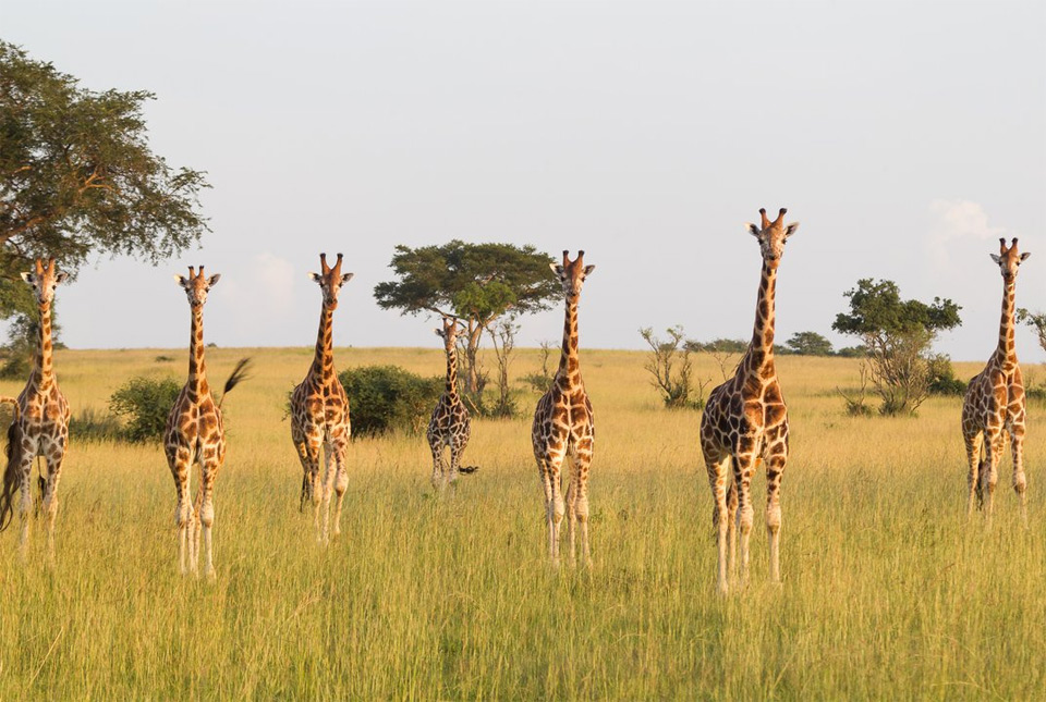 welcome to our giraffe family