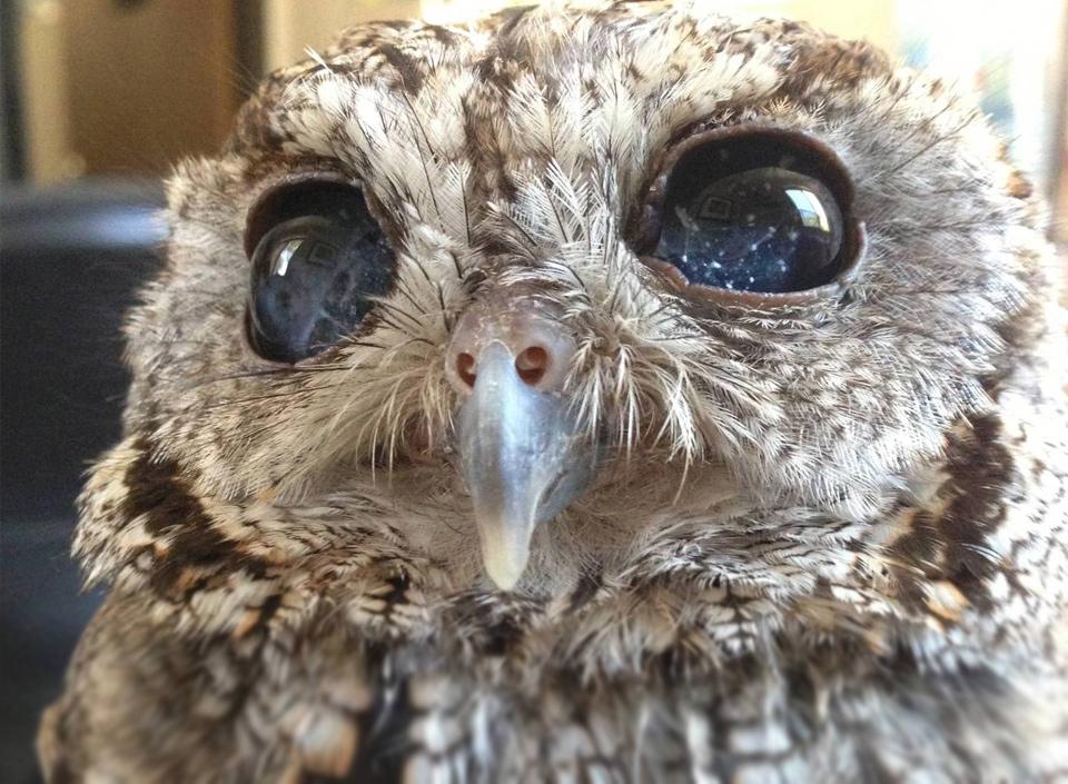 Cute Blind Owl Has Eyes That Look Like Stars in Night Sky