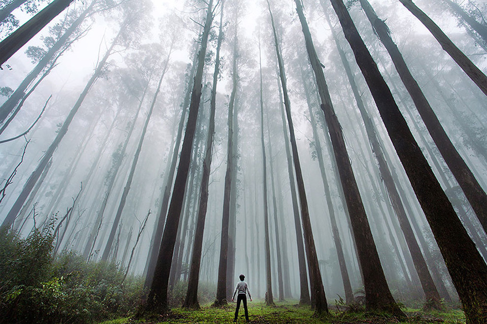 lost in the majesty of forest
