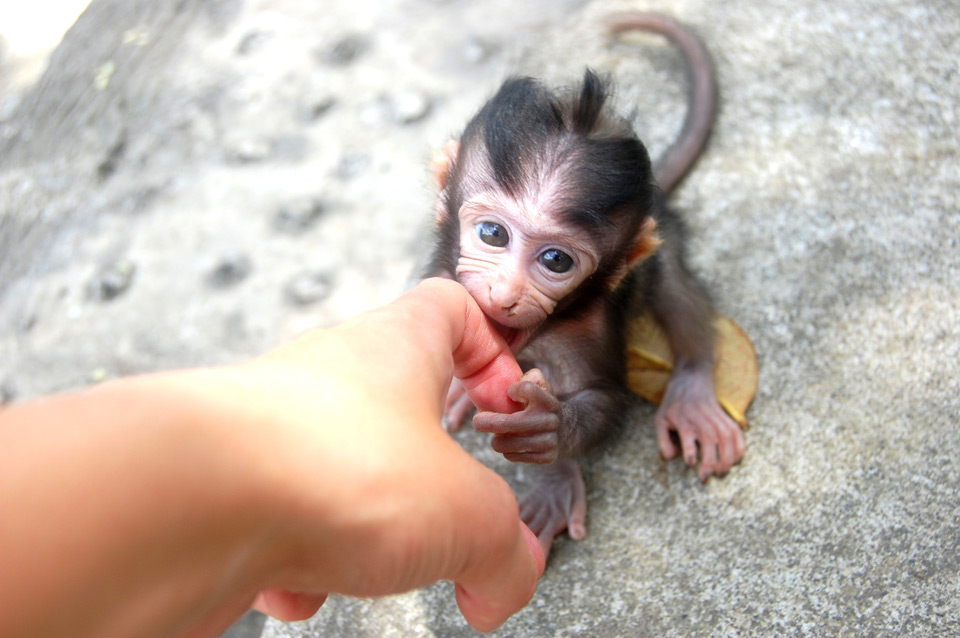 Meeting Baby Monkey, Bali