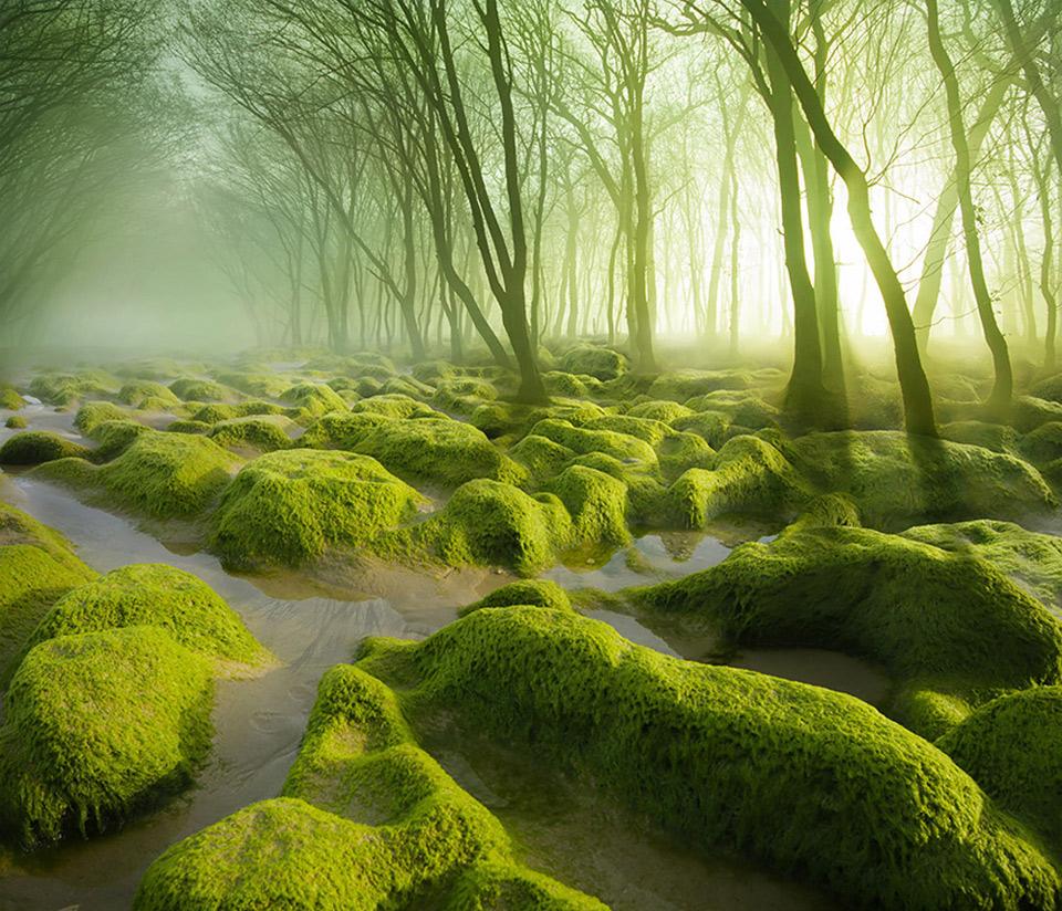 Moss Swamp, Romania