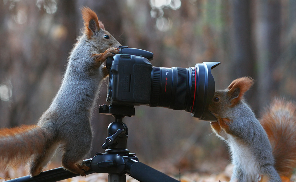 squirrel-photographers