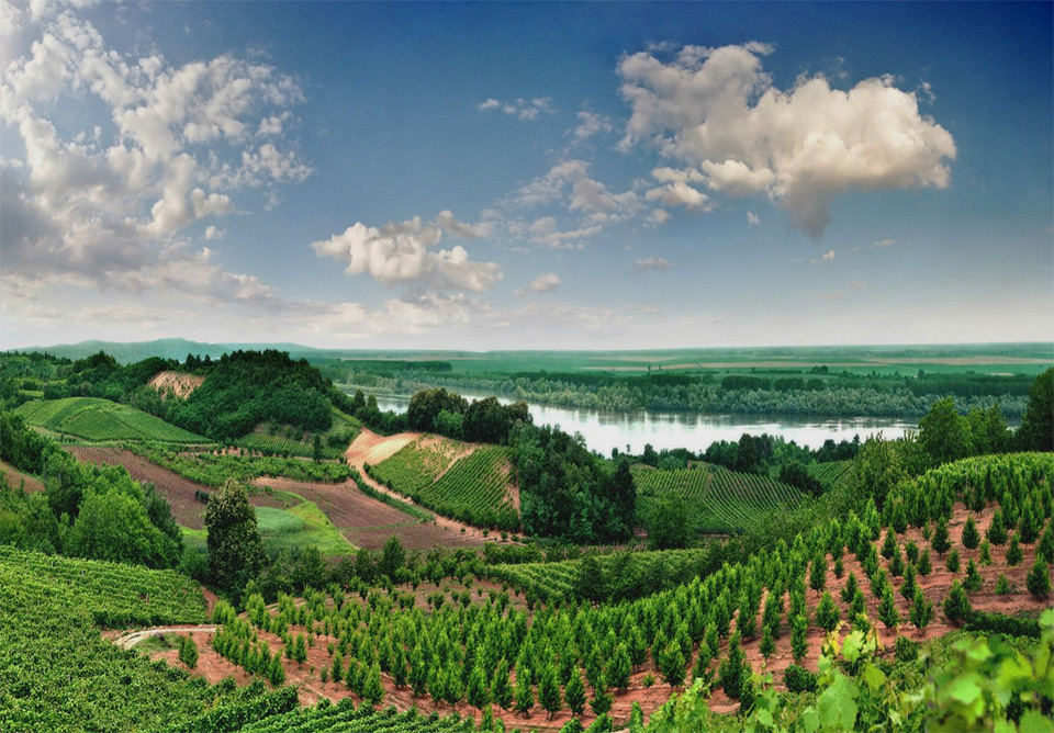 Vineyards of Vojvodina, Serbia