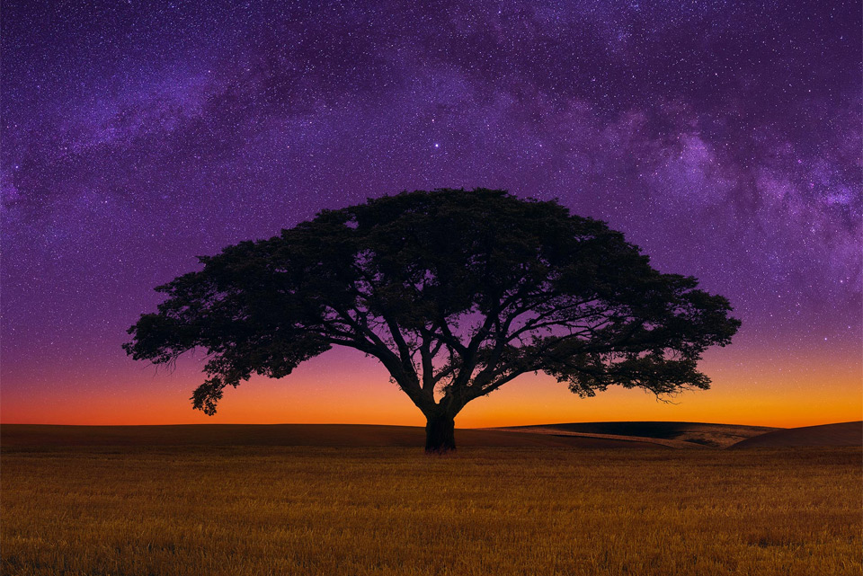 African Savannah Tree