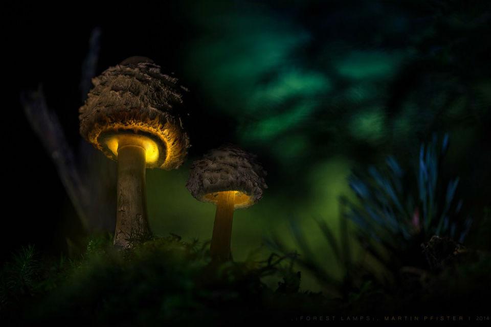 Amazing Mushroom Glow