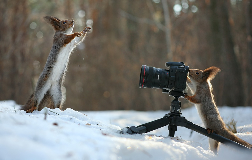 Hey Squirrel, Take A Photo Of Me!