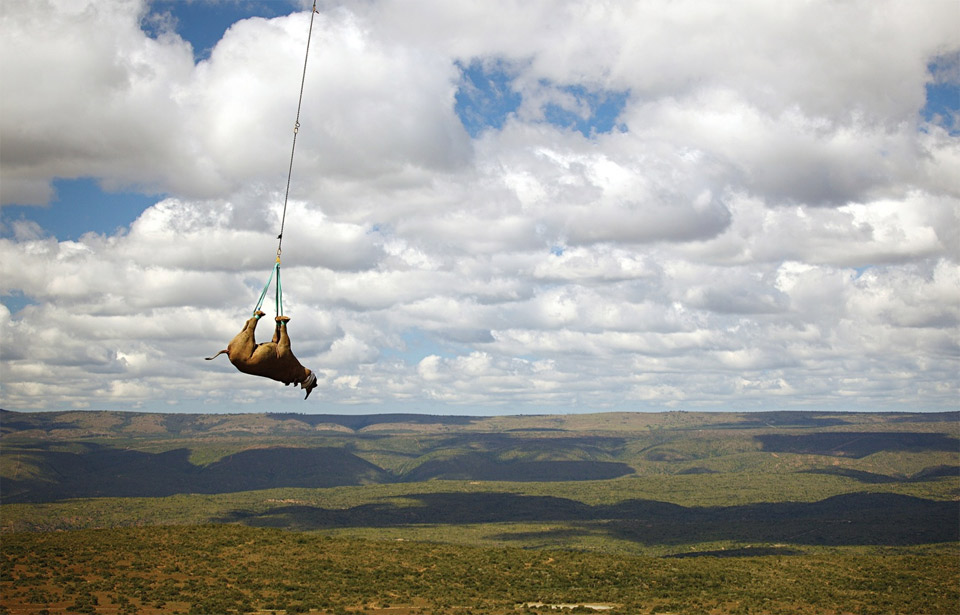 Black Rhino Transportation, South Africa