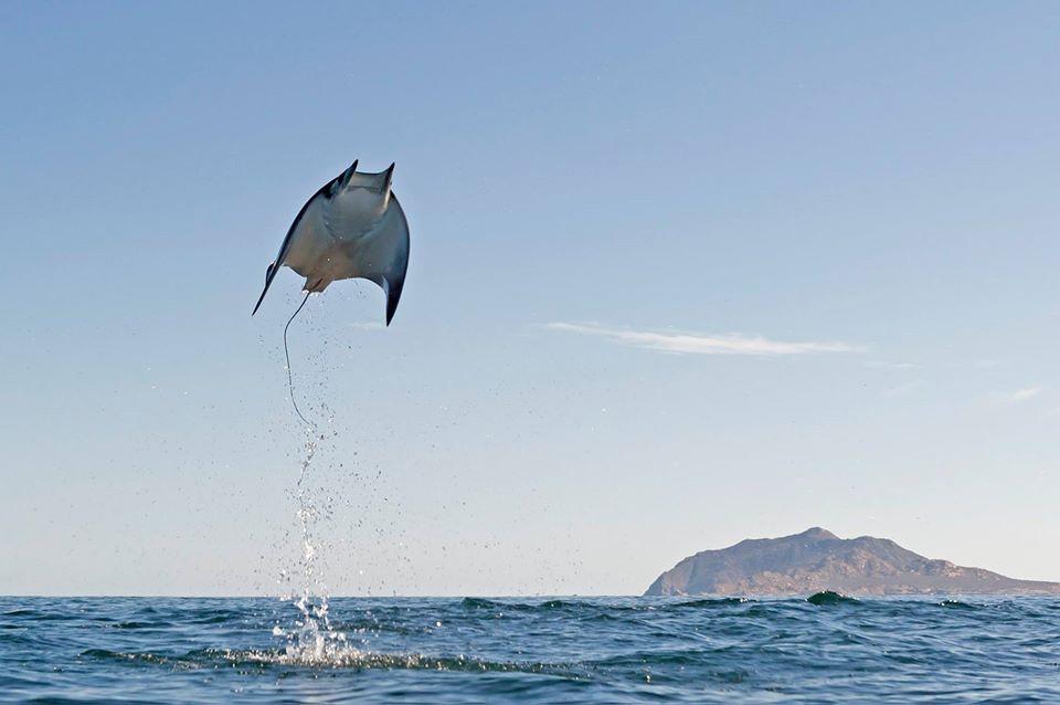Flying Munk's Devil Rays