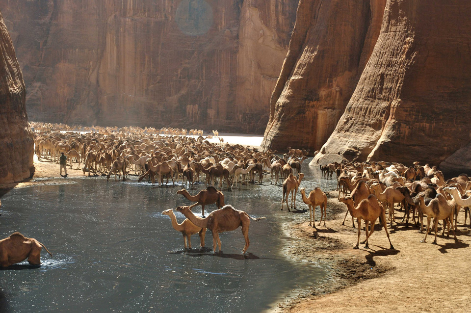 Where Camels Go To Drink, Northern Chad