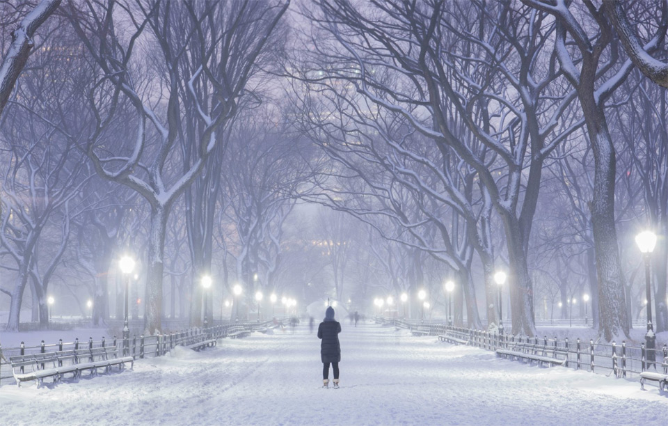 Winter At Central Park, New York
