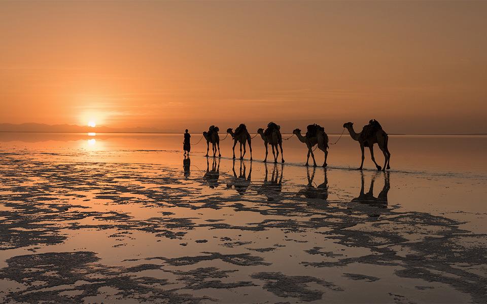 Camels On A Salt Lake, North Africa