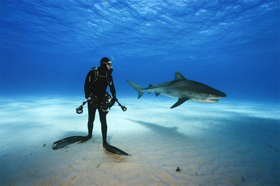 Epic Shark Diving, Bahamas