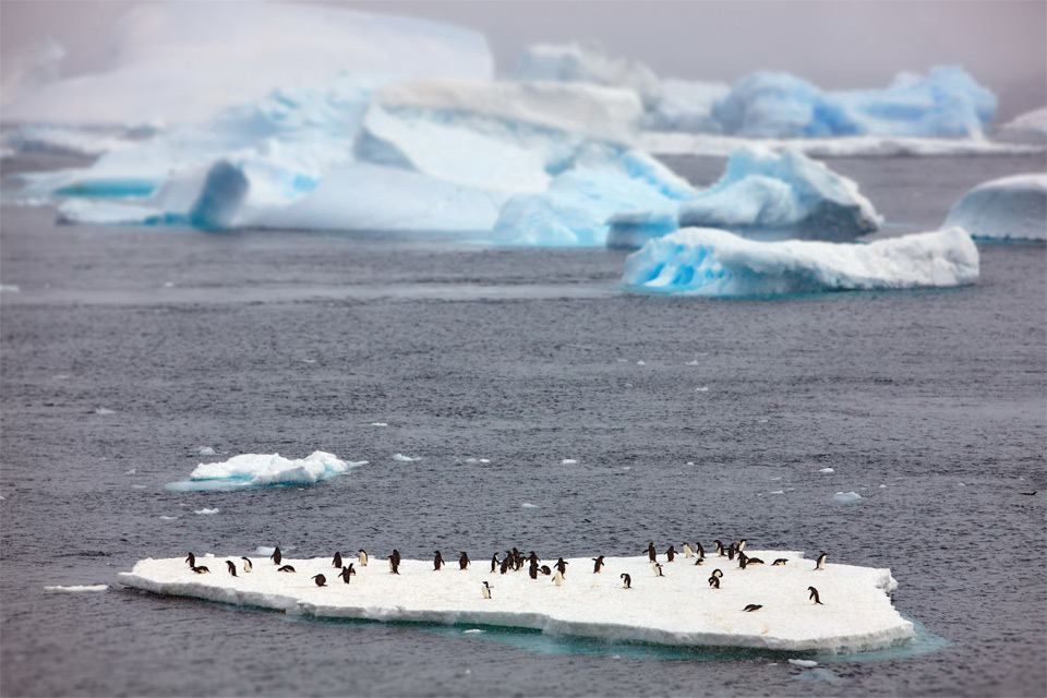 Penguins On Floating Ice Island, Antarctica