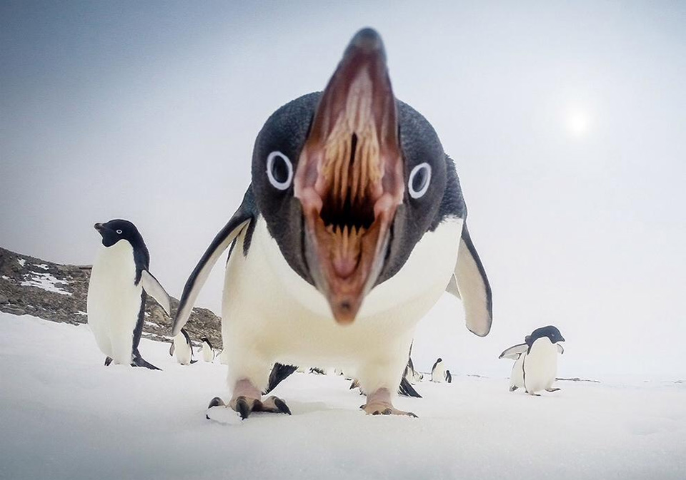Penguins Can Be Scary Too