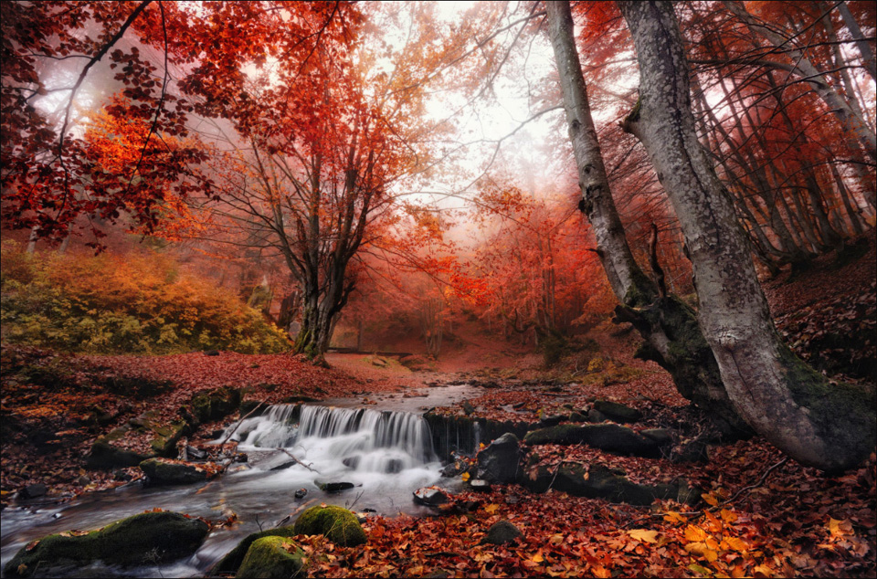 Red Forest Of Carpathians Mountains, Ukraine